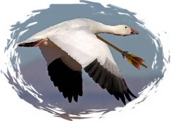 Ch4_arrowed goose